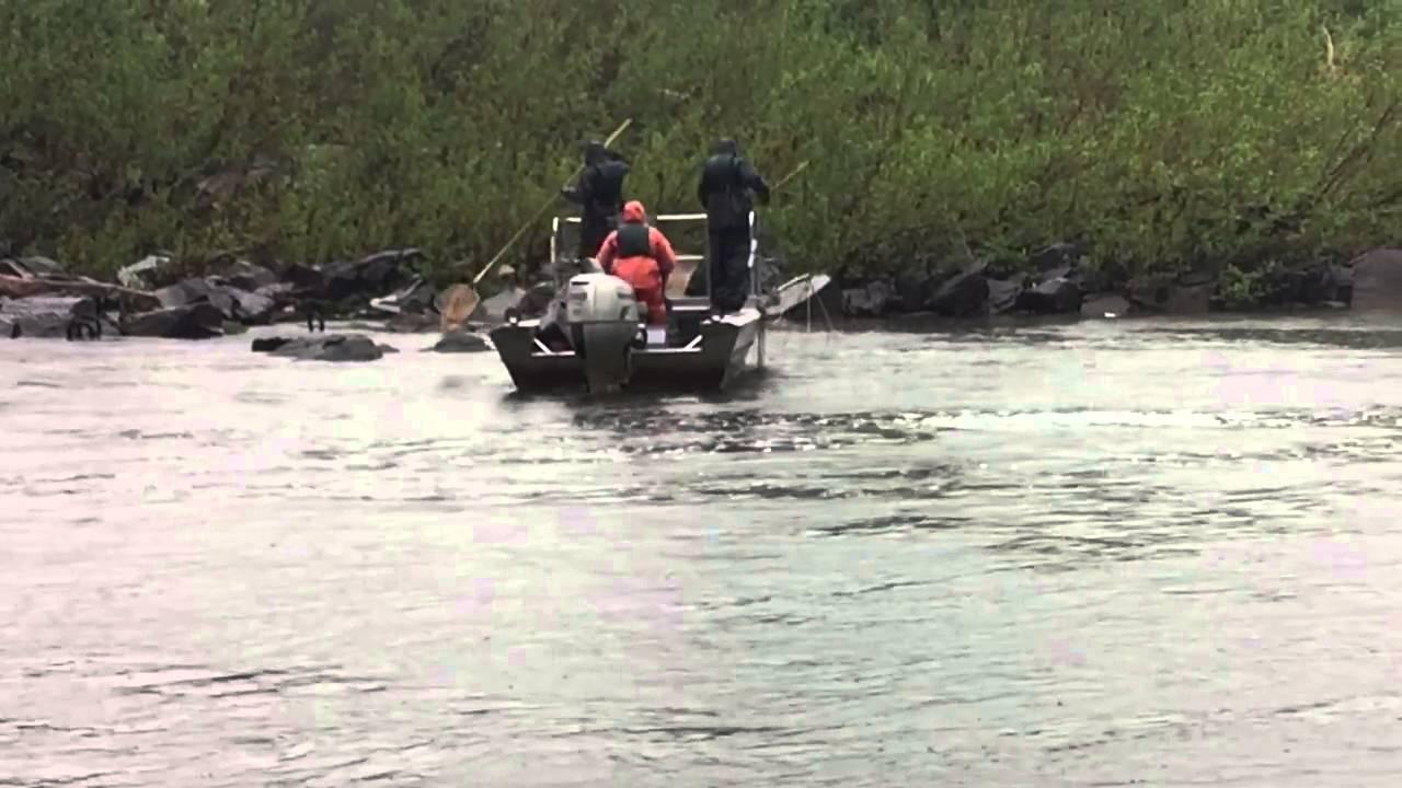 Maryland dnr electro fishing shocking potomac youtube for Md dnr fishing
