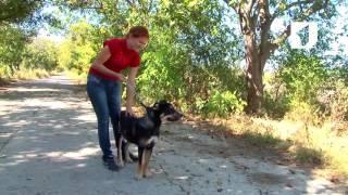 Утренний эфир / Приют для бездомных животных: где взять собаку?