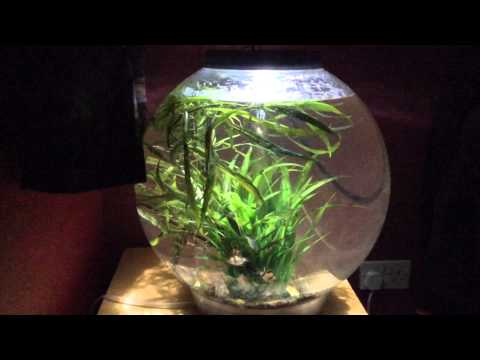 Bio Orb 60 Fish Tank Set Up And Review