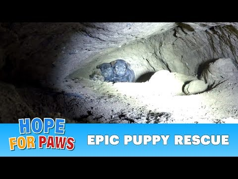 Epic puppy rescue  18 feet into the earth!!!  Dangerous Hope For Paws rescue!