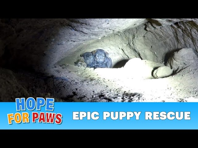 Epic puppy rescue - 18 feet into the earth!!!