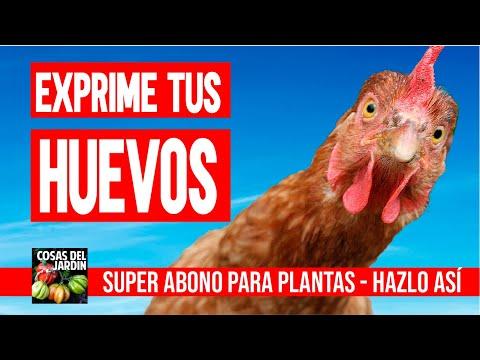 JUGO de CASCARAS DE HUEVO el mejor ABONO GRATIS para plantas