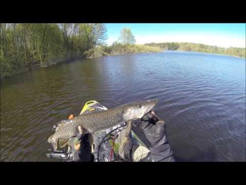 Yakfishing Belwood/Guelph Lake Pike And Carp 2017