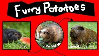 furry-potatoes