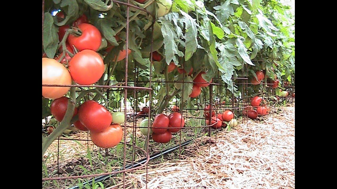Organic Pepper Update Compost Tea Moringa Amp 150 Lbs Of
