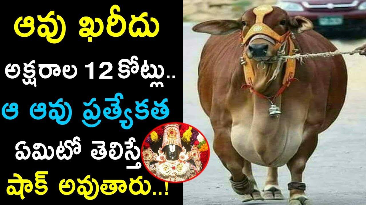 Repeat punganur Cow Cost 12 Crores I Importance of punganur
