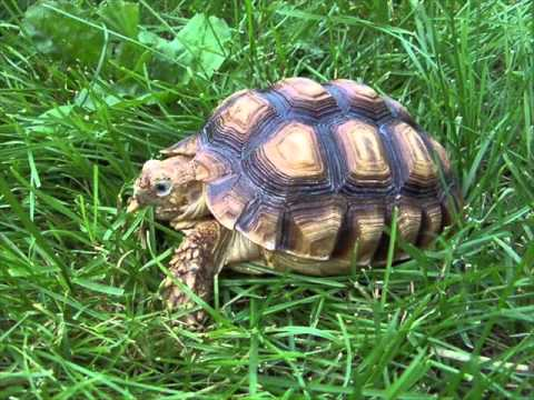 What Does Tortoise Dreams Mean Youtube