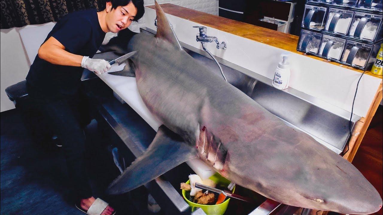100kg超え。人間すら襲う人喰いザメを解体してみると。。。