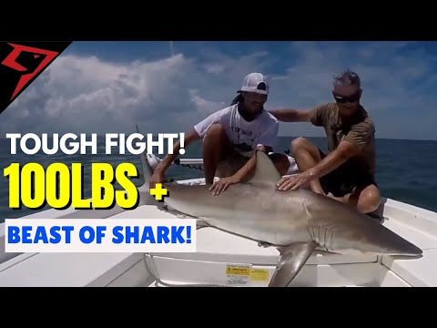 Black Tip Shark Fishing! 100 Pounds Plus on Piscifun Honor Spinning Reel