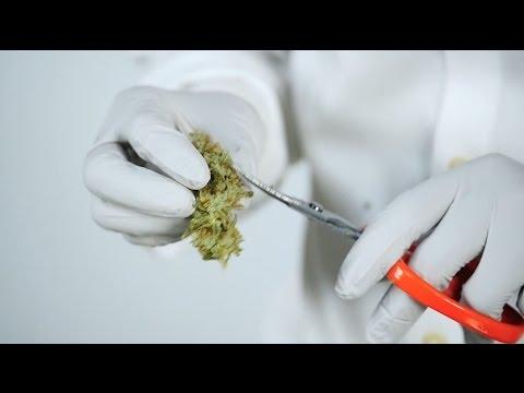 THC Design : How to Trim Cannabis
