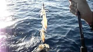 ψαρεμα καλαμαρια στο σαρωνικο
