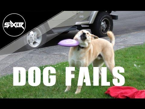Dog Fails – GTA V wasted