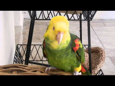 My parrot wishes you a Happy Birthday