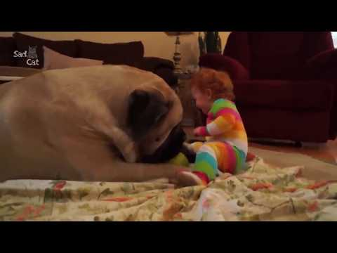 Funny Animal Videos 【犬と赤ちゃん】赤ちゃんと犬絶妙な関係・大型犬は赤ちゃん, 子供のことが大好き