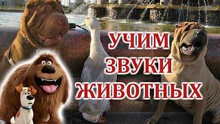 Учим звуки домашних животных | для самых маленьких | как говорят животные | развивающие видео / Видео