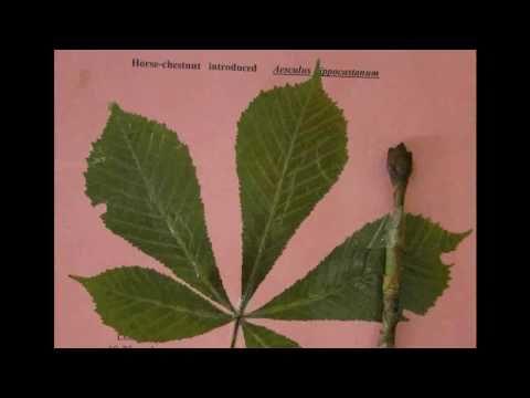 Tree Identification Type B Species Tree Test - Fleming College