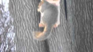 Squirrelfeeder.mov