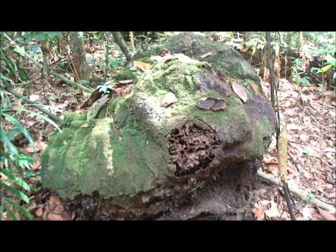 Manaos y Selva de Amazonas (Brasil) - Video Documental