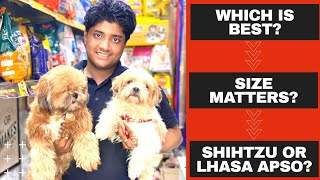 Shihtzu v/s Lhasa Apso which is best for you and in your budget? Basic differences between the both.