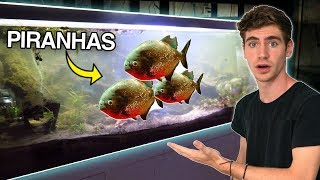 FEEDING *PIRANHAS* in EXOTIC PET STORE!! -  (UK Pt. 2)