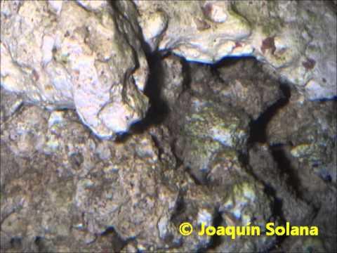 Amfipodos en un Acuario Marino ( AMPHIPODA )