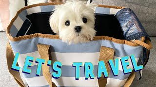 WHAT WILL YOUR MALTESE PUPPY NEED?