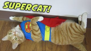 TOP 10 CAT SUPERPOWERS