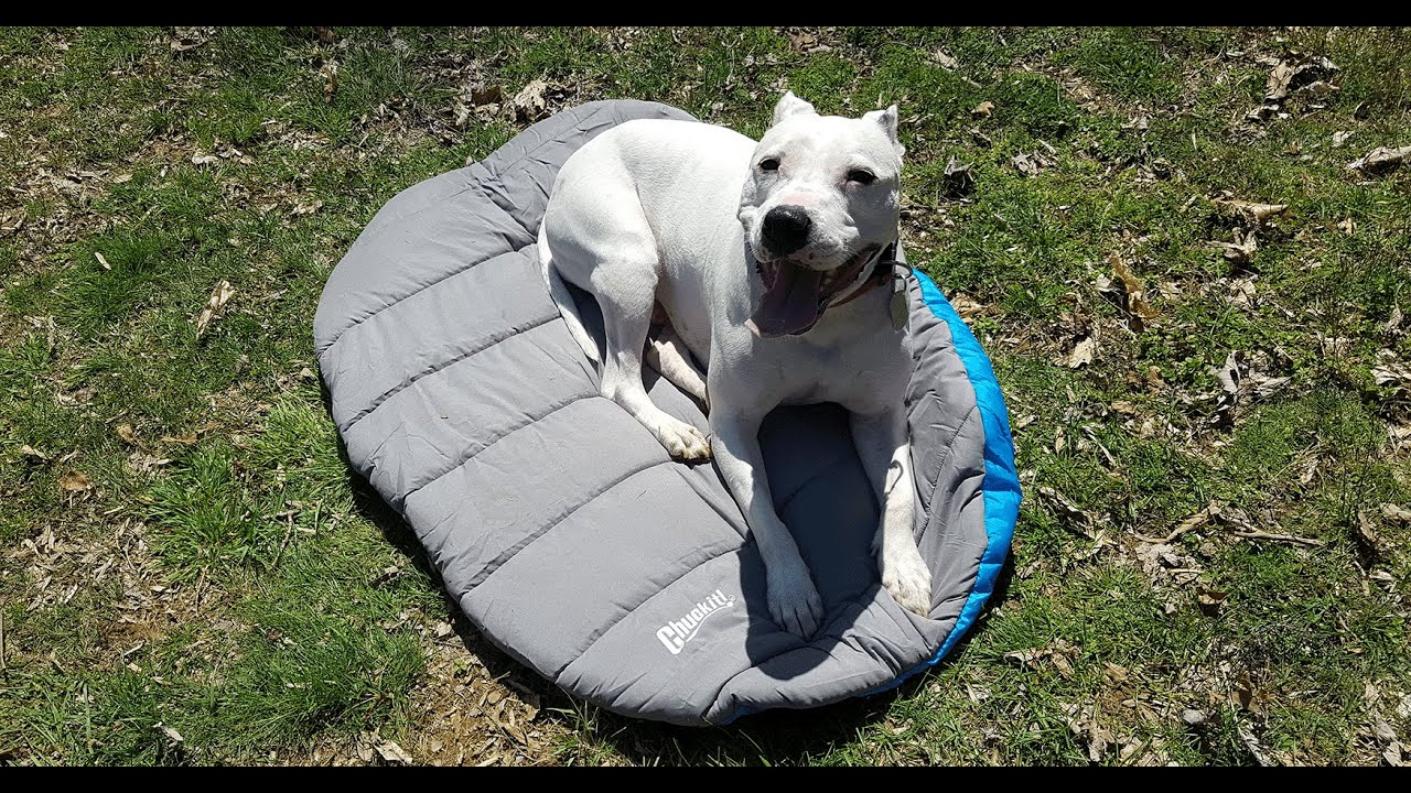 Review Of The Chuckit Travel Dog Bed For In The Field Use