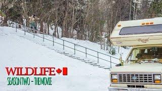 WILDLIFE Season 2: The Movie - Teaser