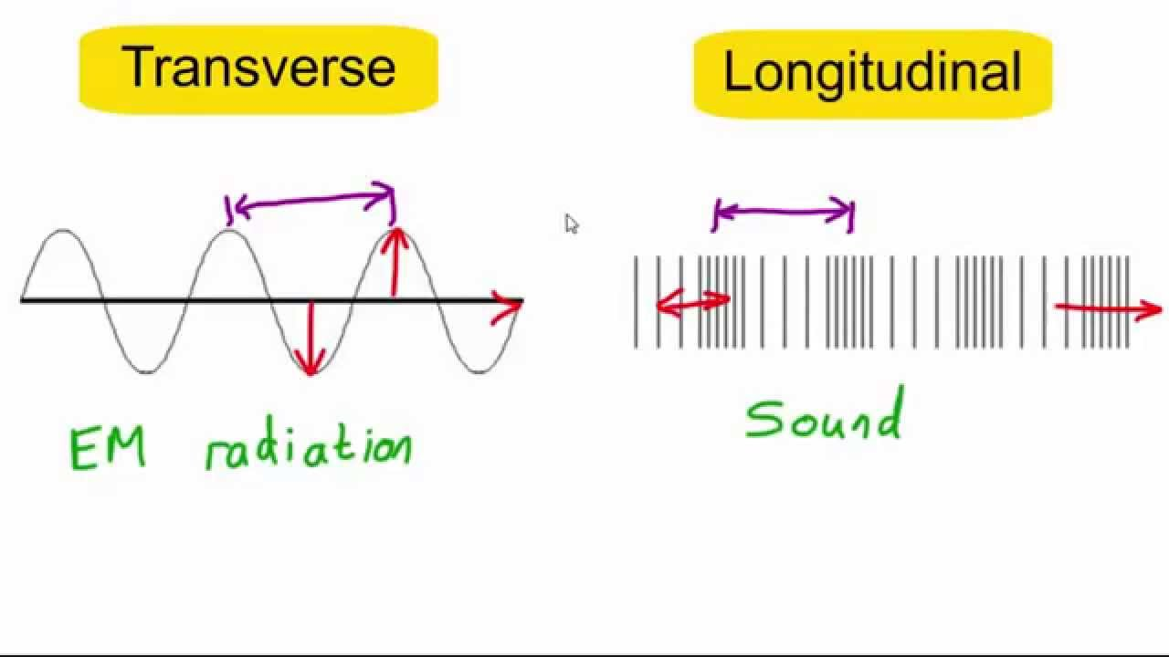 Transverse Vs Longitudinal Waves Youtube