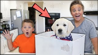 SURPRISING MY LITTLE BROTHER WITH A PUPPY! * EMOTIONAL *