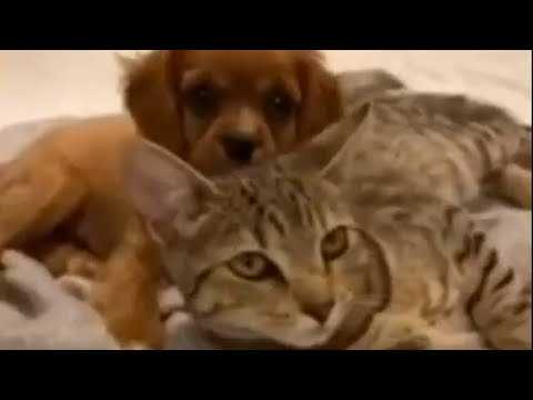Cat and puppy preciously cuddle with each other