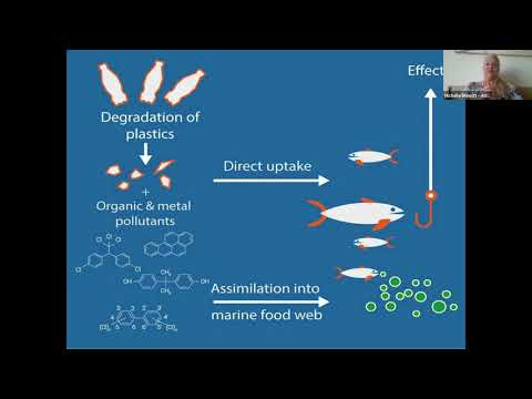CitSciOzOnline: Innovation in Citizen Science - Dr Michelle Blewitt-  Beating Plastic Pollution using Citizen Science