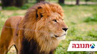 ספארי רמת גן והאריות - זמן משפחה