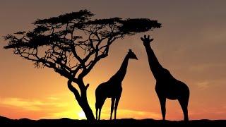 Epic Cinematic Music | Africa - Marcus Warner
