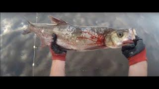 Рыбалка на сети ЗАГОТОВКА РЫБЫ Лесковая сеть100 метров Ячея 65