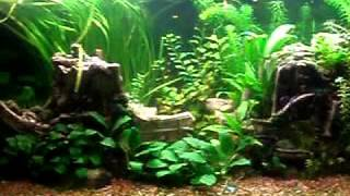 Aquarium Decoration Ideas