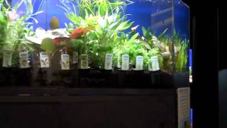 Aquariums West Tropica Plants 01/29/11 796 Beatty Street Van