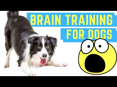 brain-training-for-dogs-[-teach-your-dog-these-amazing-tricks-&-commands-super-easy]