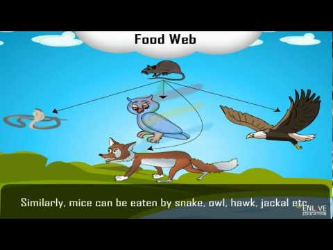 Download Food Web