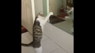 ПРИКОЛЫ С КОТАМИ - Смешные коты и кошки 2019  7.3