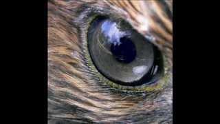 Şahinler / Falcons