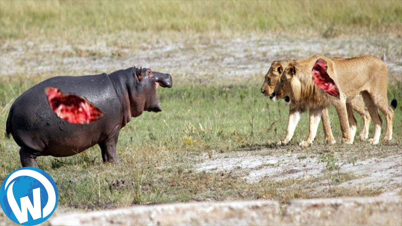 Download The Most Extreme Wild Animals Battles!