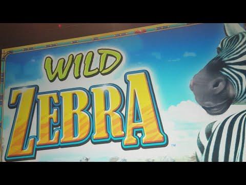 Live Play On Wild Zebra - Chasing That Dream Trigger!