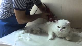 shaving my cat - NEW!