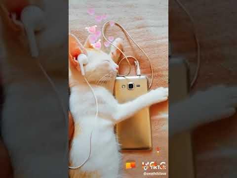 Cat are Cute