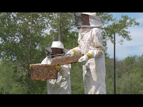 RIT Beekeepers in :30