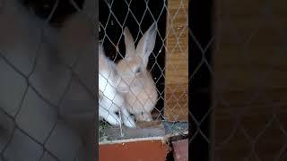 Şirin dovşanlar 🐰🐇🐇🐇🐇🐇🐇🐇🐇(1)