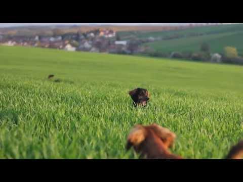 'Cute Dogs Running In The Field' VIDA DE PERROS