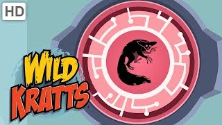 Wild Kratts 🎃 Creatures Come Out at Night! 👻 | Kids Videos